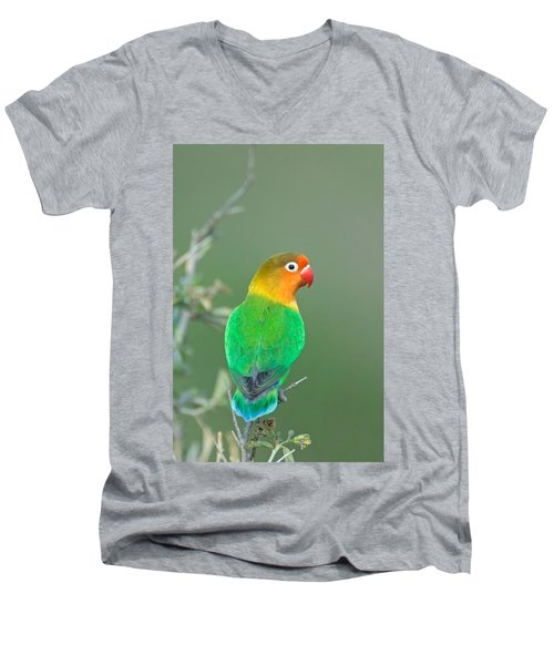Close-up Of A Fischers Lovebird Men's V-Neck T-Shirt