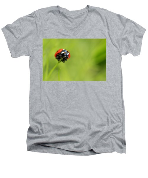 Coccinellidae  Men's V-Neck T-Shirt