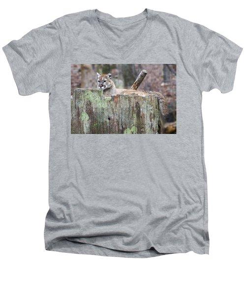 Cougar On A Stump Men's V-Neck T-Shirt by Chris Flees