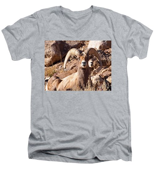 Desert Bighorn Sheep Men's V-Neck T-Shirt