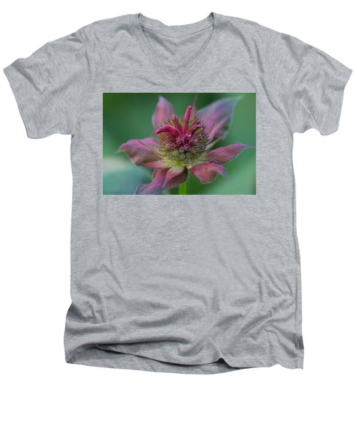Early Spring Bee Balm Bud Men's V-Neck T-Shirt
