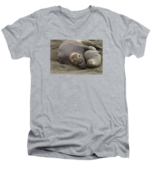 Elephant Seal Couple Men's V-Neck T-Shirt by Duncan Selby