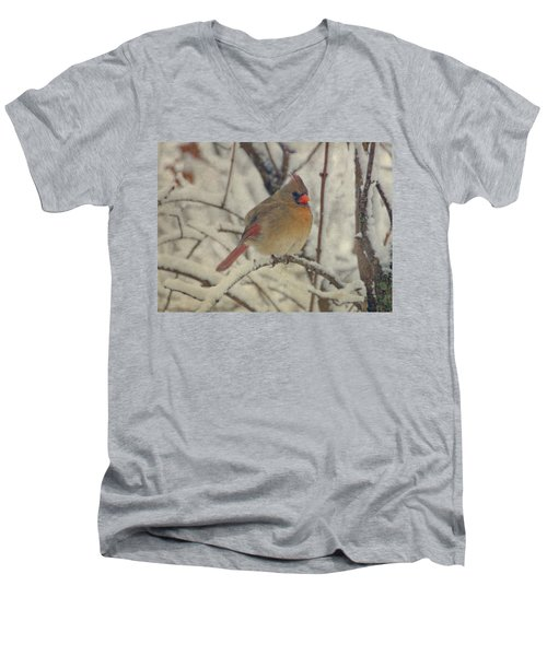 Female Cardinal In The Snow II Men's V-Neck T-Shirt