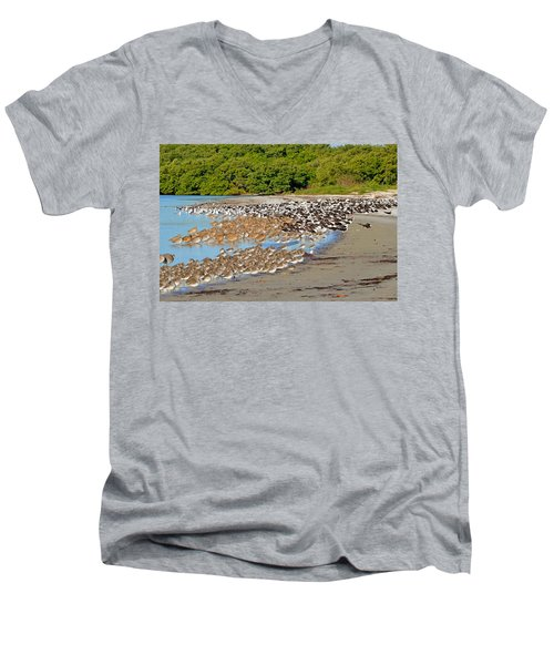 Men's V-Neck T-Shirt featuring the photograph Four Species Of Birds At Roost On Tampa Bay Beach by Jeff at JSJ Photography