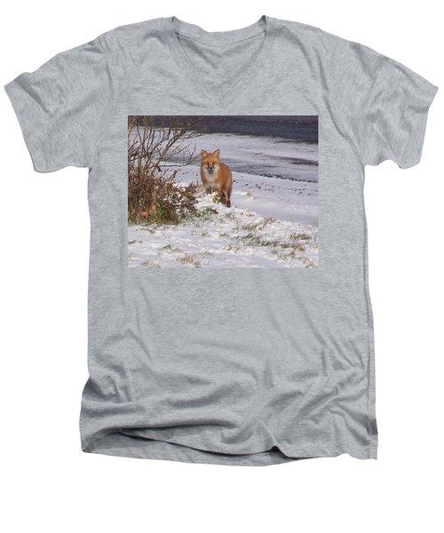 Fox In My Yard Men's V-Neck T-Shirt