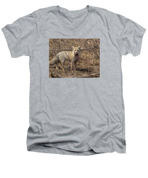 Foxy In Disguise Men's V-Neck T-Shirt by Yeates Photography