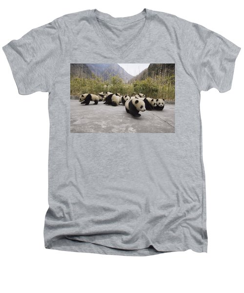 Giant Panda Cubs Wolong China Men's V-Neck T-Shirt
