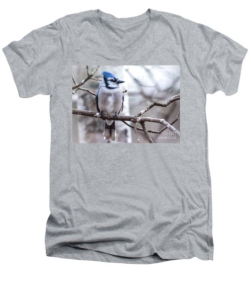 Gorgeous Blue Jay Men's V-Neck T-Shirt