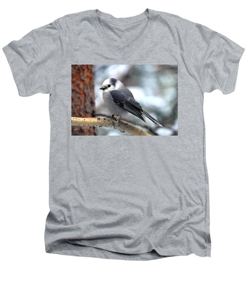 Gray Jay On Aspen Men's V-Neck T-Shirt by Marilyn Burton