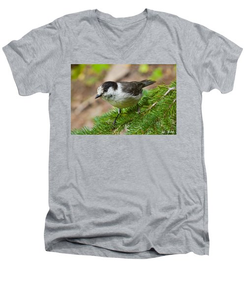 Gray Jay On Fir Tree Men's V-Neck T-Shirt