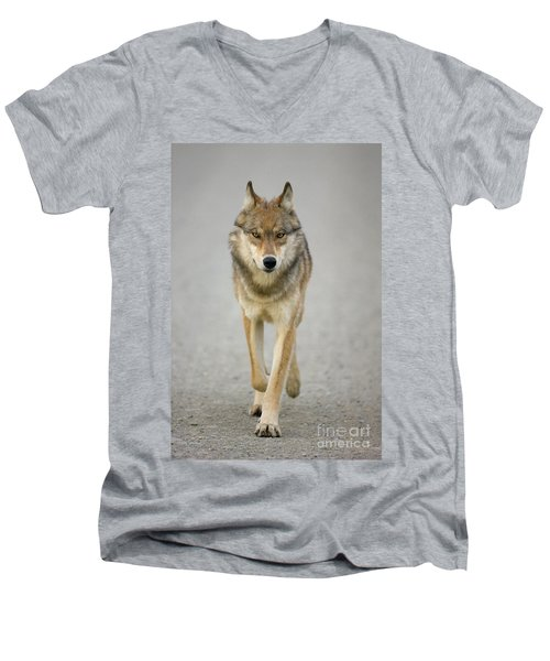 Gray Wolf Denali National Park Alaska Men's V-Neck T-Shirt