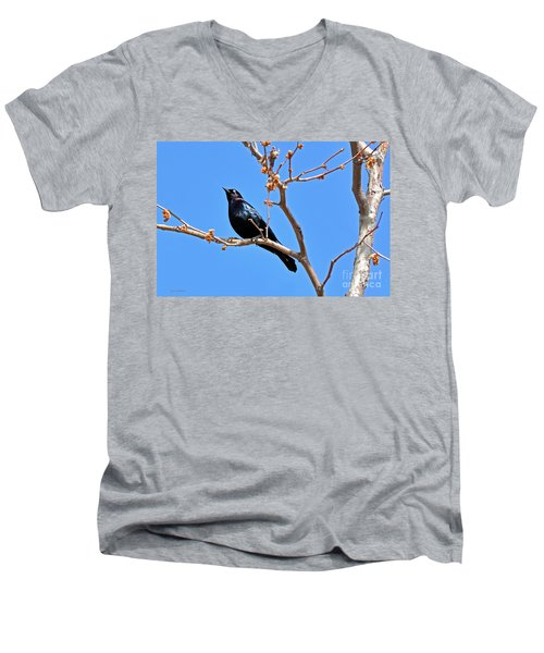 Great-tailed Grackle On A Sunny Spring Day Men's V-Neck T-Shirt