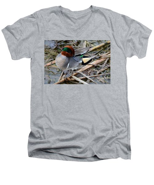 Green-winged Teal Men's V-Neck T-Shirt by Debra Martz