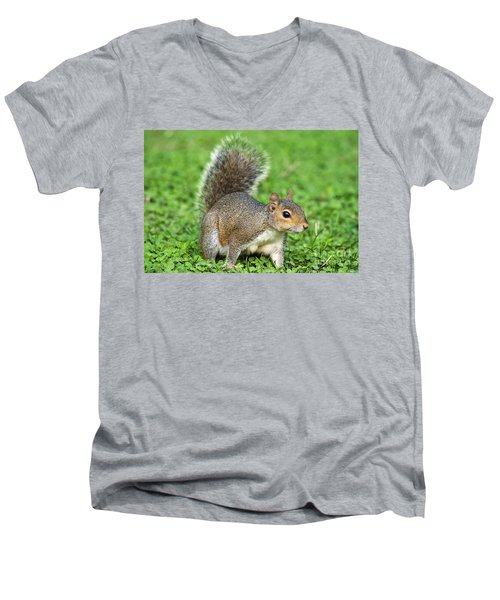 Men's V-Neck T-Shirt featuring the photograph Grey Squirrel by Antonio Scarpi