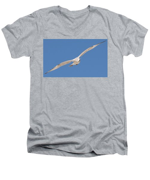 Gull In Flight  Men's V-Neck T-Shirt