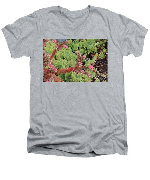 Hen And Chick In Bloom Men's V-Neck T-Shirt