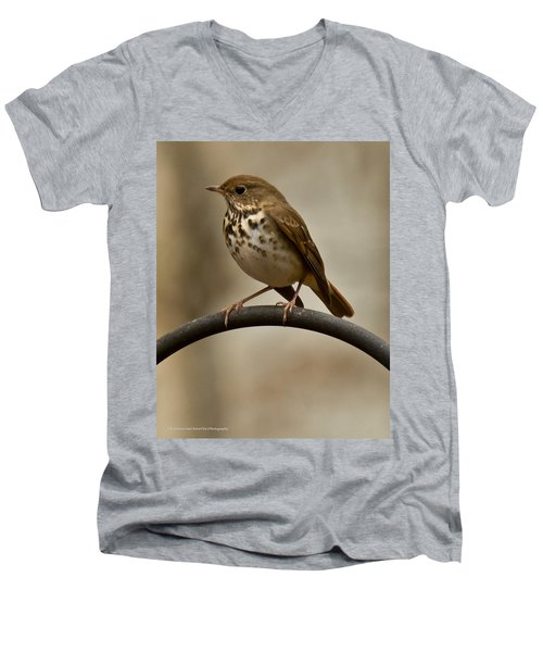 Men's V-Neck T-Shirt featuring the photograph Hermit Thrush by Robert L Jackson