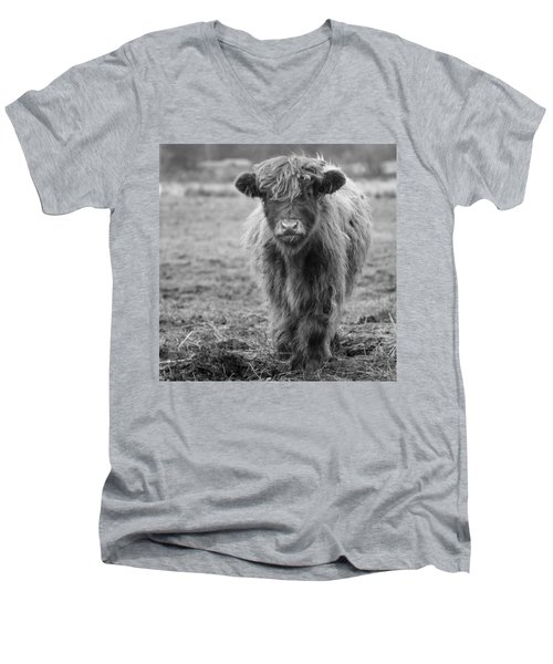Highland Calf Men's V-Neck T-Shirt by Sonya Lang