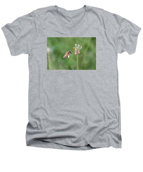 Honeybee And English Plantain Men's V-Neck T-Shirt by Lucinda VanVleck