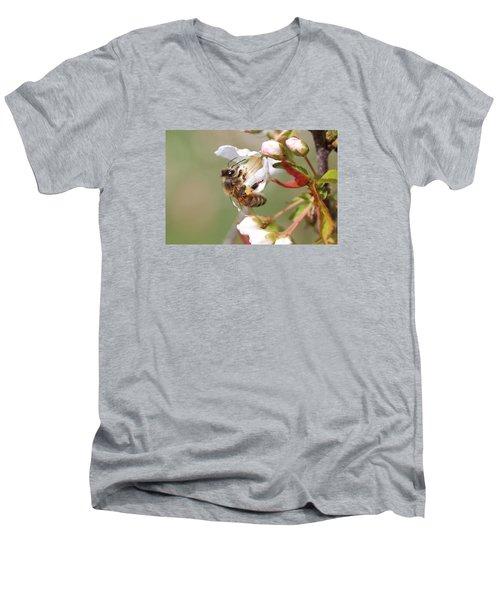 Honeybee On Cherry Blossom Men's V-Neck T-Shirt by Lucinda VanVleck