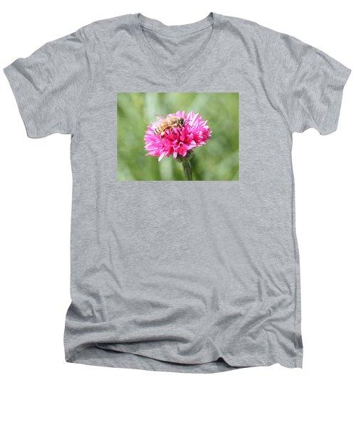 Honeybee On Pink Bachelor's Button Men's V-Neck T-Shirt by Lucinda VanVleck