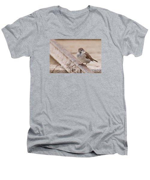 House Sparrow Men's V-Neck T-Shirt