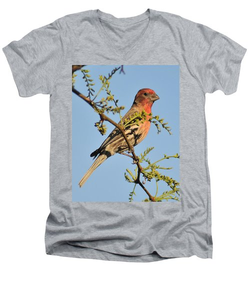 Housefinch 272 Men's V-Neck T-Shirt