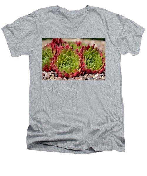 Houseleeks Aka Sempervivum From The Side Men's V-Neck T-Shirt