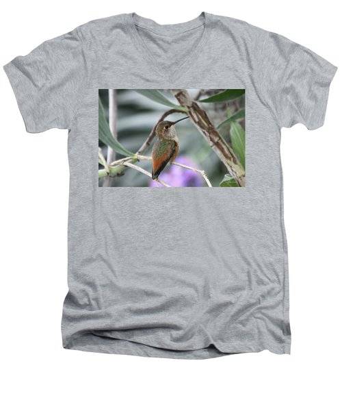 Hummingbird On A Branch Men's V-Neck T-Shirt