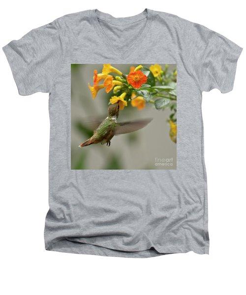 Hummingbird Sips Nectar Men's V-Neck T-Shirt