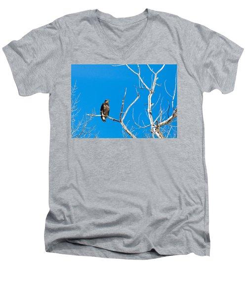 Immature Bald Eagle Men's V-Neck T-Shirt