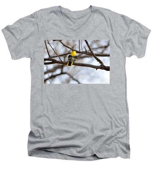 Indian Golden Oriole Men's V-Neck T-Shirt