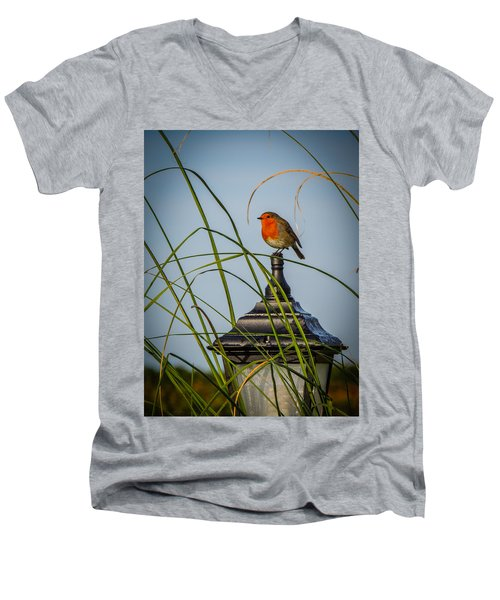 Irish Robin Perched On Garden Lamp Men's V-Neck T-Shirt