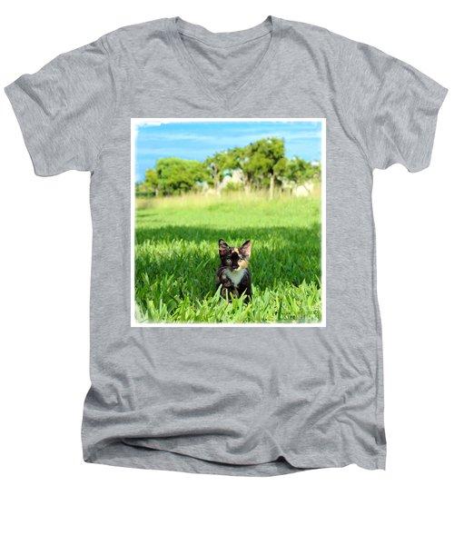 Kitten Men's V-Neck T-Shirt by Carsten Reisinger
