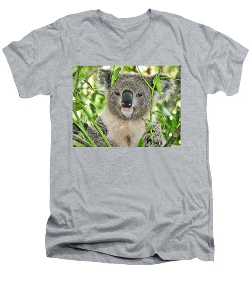 Koala Bear Men's V-Neck T-Shirt