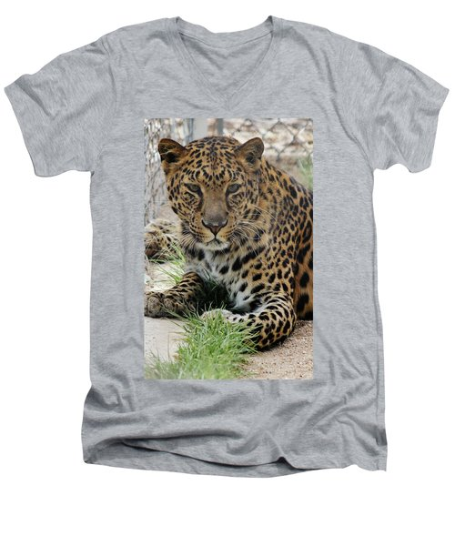 Leopard Lounging 1 Men's V-Neck T-Shirt