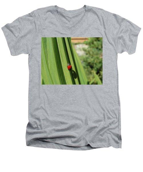 Ladybird Men's V-Neck T-Shirt by Cheryl Hoyle