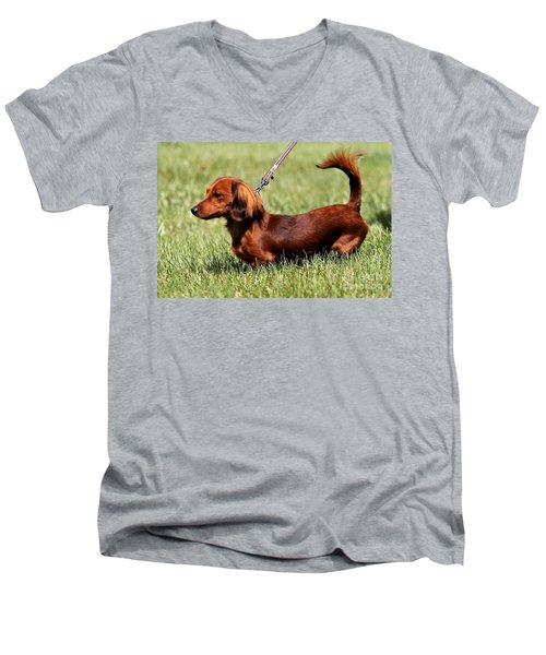 Long Haired Dachshund Men's V-Neck T-Shirt