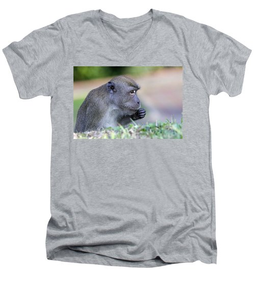 Men's V-Neck T-Shirt featuring the photograph Long Tailed Macaque Feeding by Shoal Hollingsworth