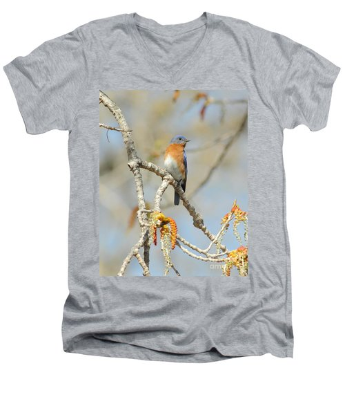 Male Bluebird In Budding Tree Men's V-Neck T-Shirt