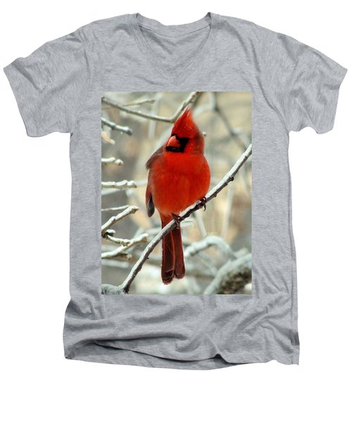 Men's V-Neck T-Shirt featuring the photograph Male Cardinal  by Janette Boyd