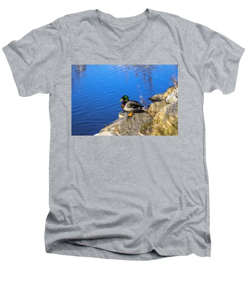 Mallard Looking Over His Domain Men's V-Neck T-Shirt