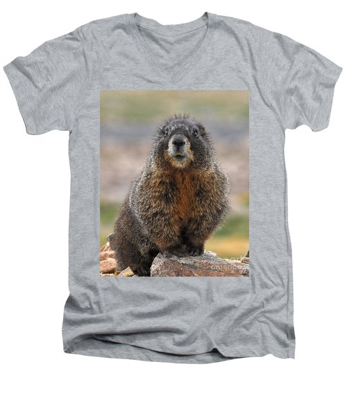 Men's V-Neck T-Shirt featuring the photograph Marmot by Mae Wertz