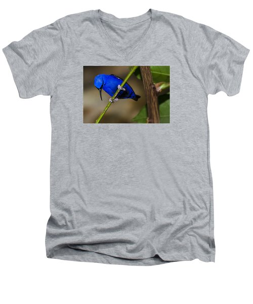 Men's V-Neck T-Shirt featuring the photograph Masked Blue Bird by Penny Lisowski