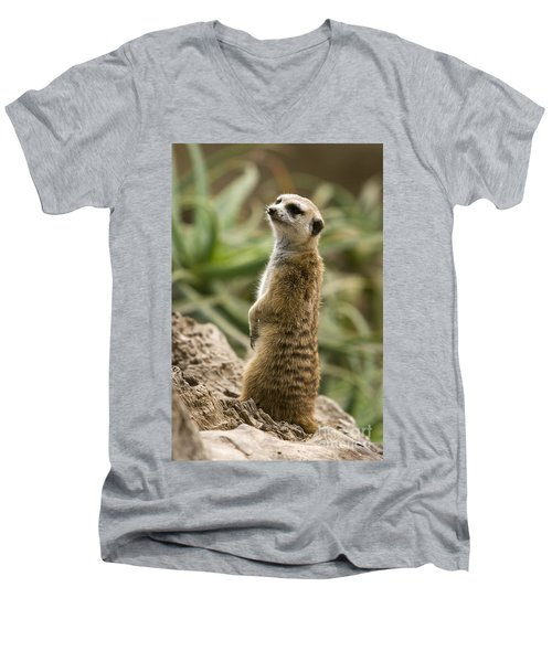 Meerkat Mongoose Portrait Men's V-Neck T-Shirt by David Millenheft