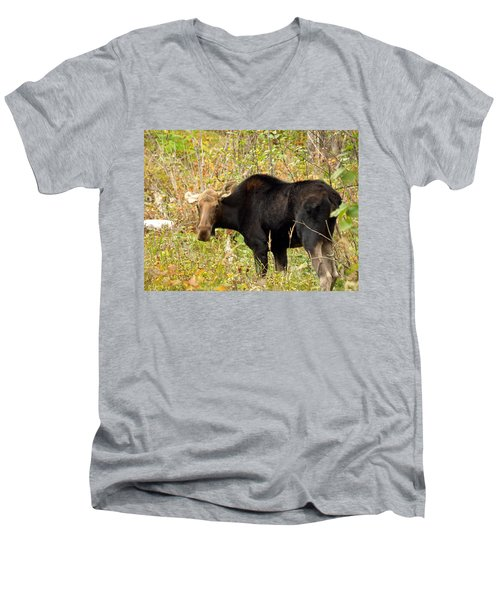 Men's V-Neck T-Shirt featuring the photograph Moose by James Peterson