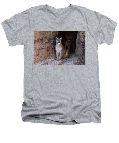 Men's V-Neck T-Shirt featuring the photograph Mountain Lion 1 by Arterra Picture Library