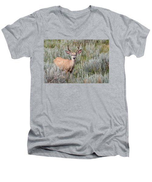 Mule Deer Men's V-Neck T-Shirt