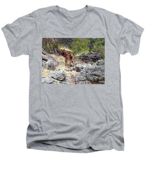 Men's V-Neck T-Shirt featuring the photograph Newborn Elk Calf by Shane Bechler