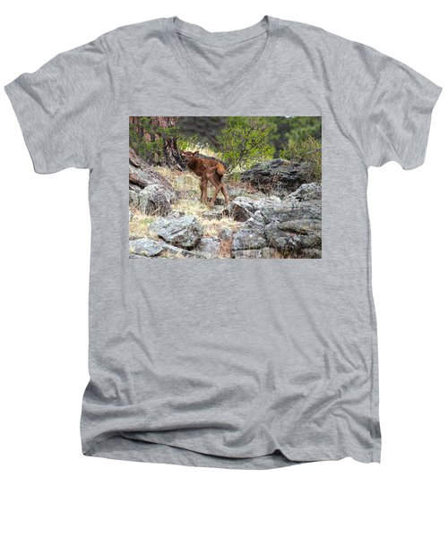 Newborn Elk Calf Men's V-Neck T-Shirt